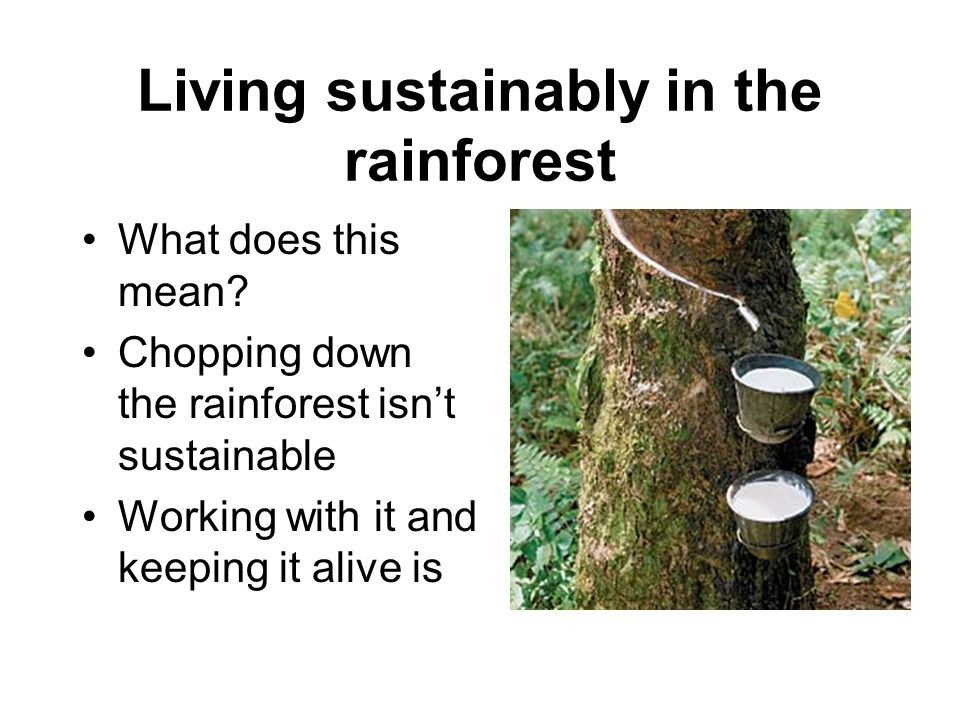 Living sustainably in the rainforest What does this mean.