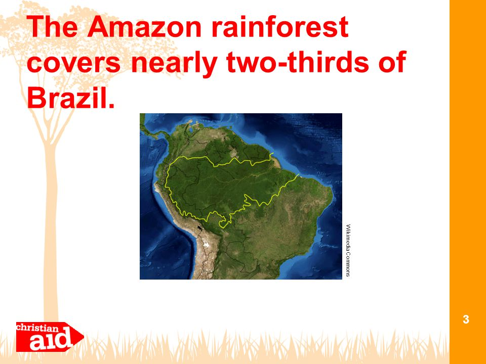 The Amazon rainforest covers nearly two-thirds of Brazil. 3 Wikimedia Commons
