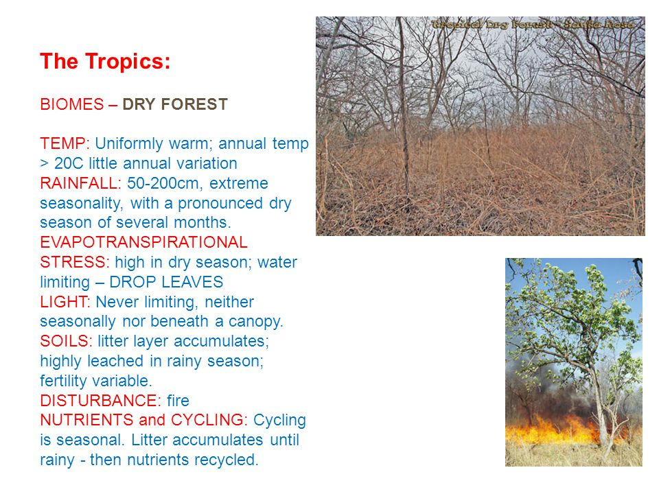 The Tropics: BIOMES – DRY FOREST TEMP: Uniformly warm; annual temp > 20C little annual variation RAINFALL: 50-200cm, extreme seasonality, with a pronounced dry season of several months.