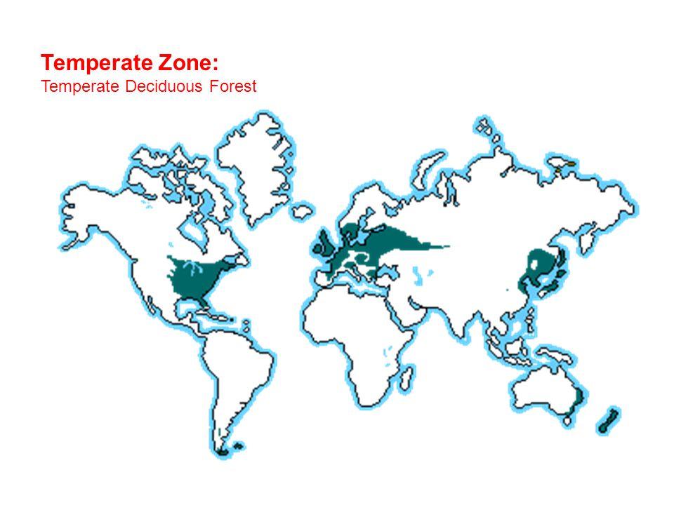 Temperate Zone: Temperate Deciduous Forest