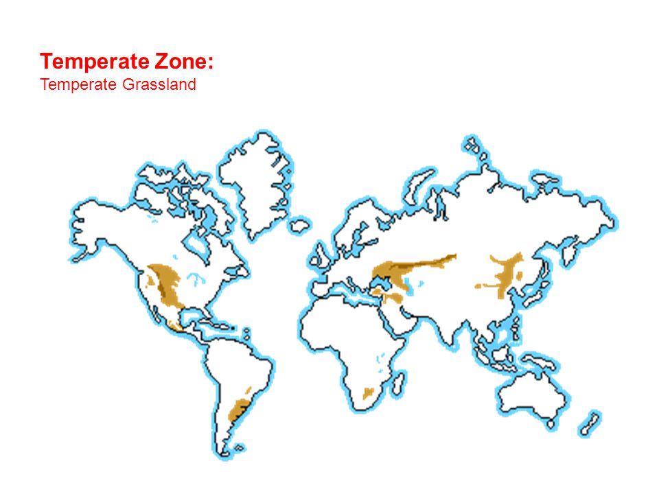 Temperate Zone: Temperate Grassland