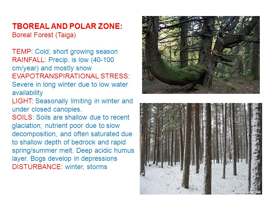 TBOREAL AND POLAR ZONE: Boreal Forest (Taiga) TEMP: Cold; short growing season RAINFALL: Precip.