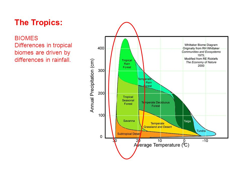 The Tropics: BIOMES Differences in tropical biomes are driven by differences in rainfall.