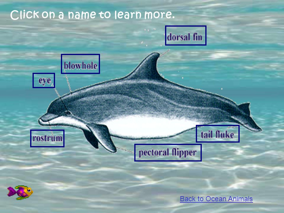 Click on a name to learn more. Back to Ocean Animals