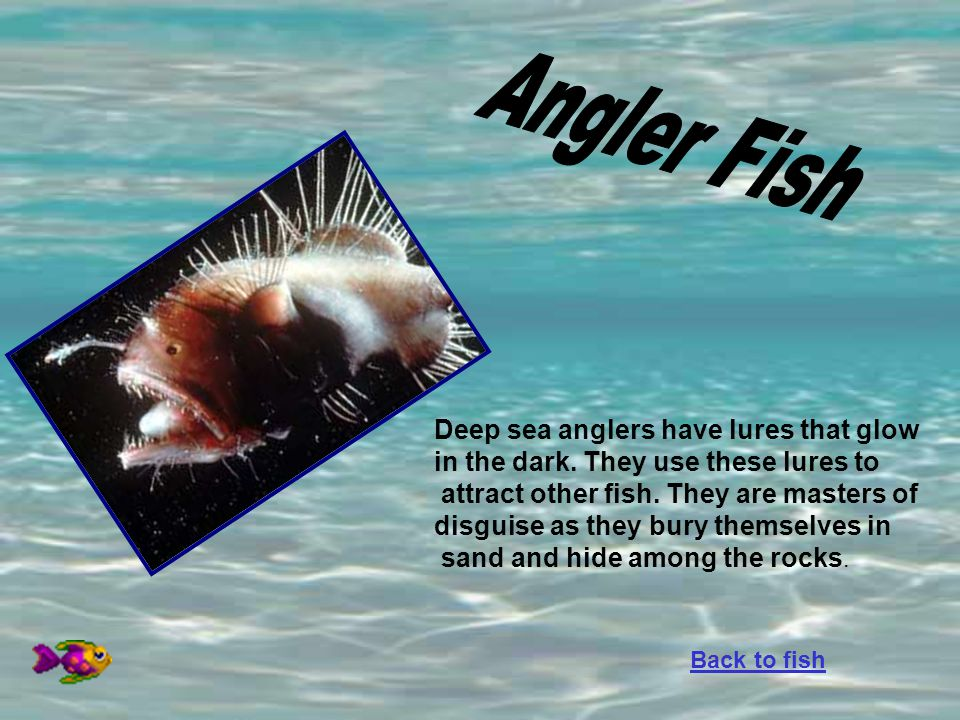 Deep sea anglers have lures that glow in the dark. They use these lures to attract other fish. They are masters of disguise as they bury themselves in