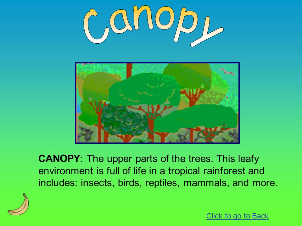CANOPY: The upper parts of the trees. This leafy environment is full of life in a tropical rainforest and includes: insects, birds, reptiles, mammals,