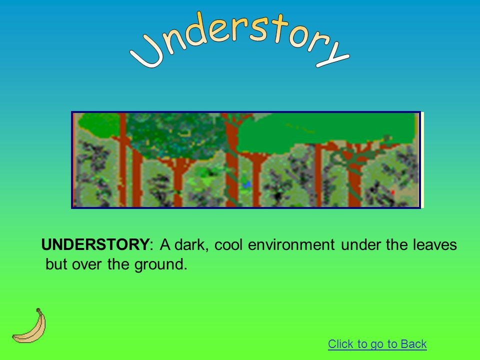 UNDERSTORY: A dark, cool environment under the leaves but over the ground. Click to go to Back