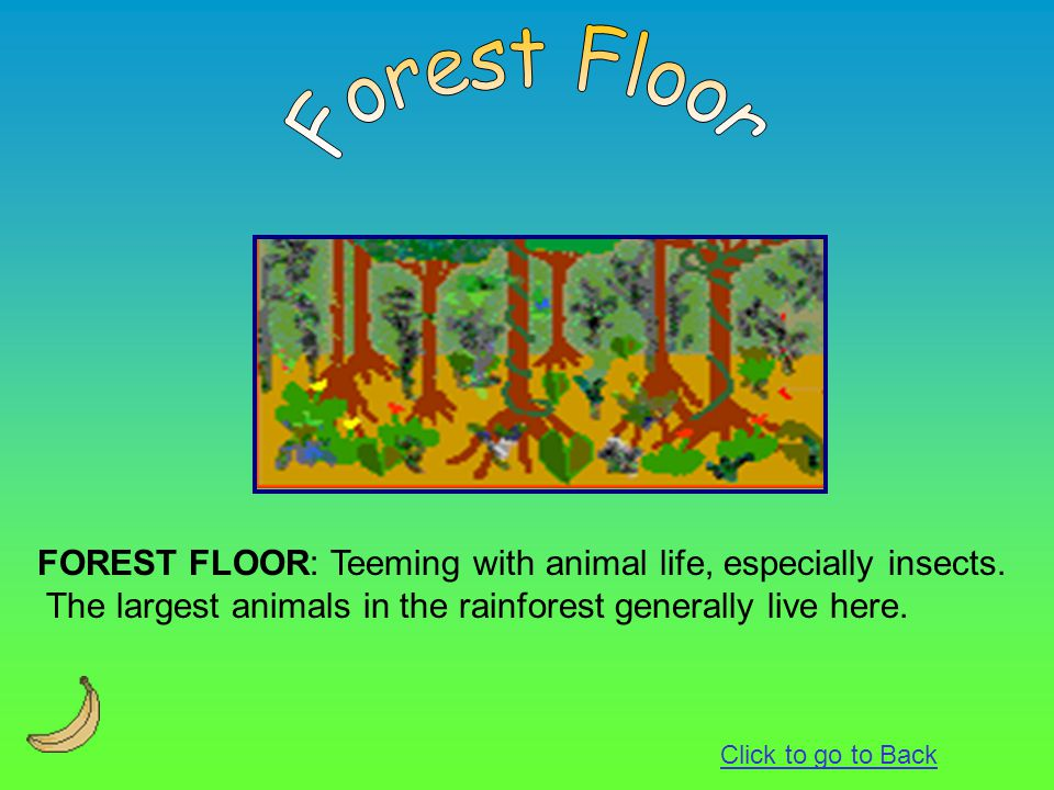 FOREST FLOOR: Teeming with animal life, especially insects. The largest animals in the rainforest generally live here. Click to go to Back
