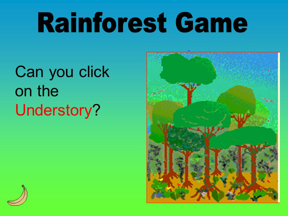 Can you click on the Understory?