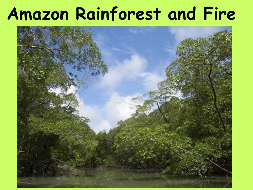 Amazon Rainforest and Fire