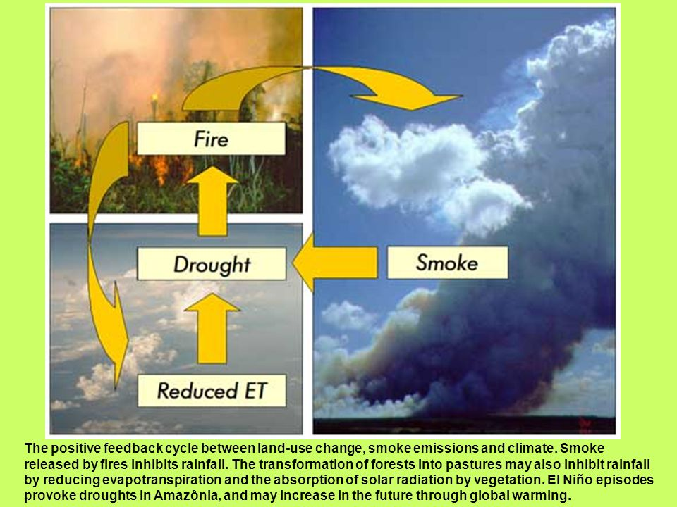 The positive feedback cycle between land-use change, smoke emissions and climate.