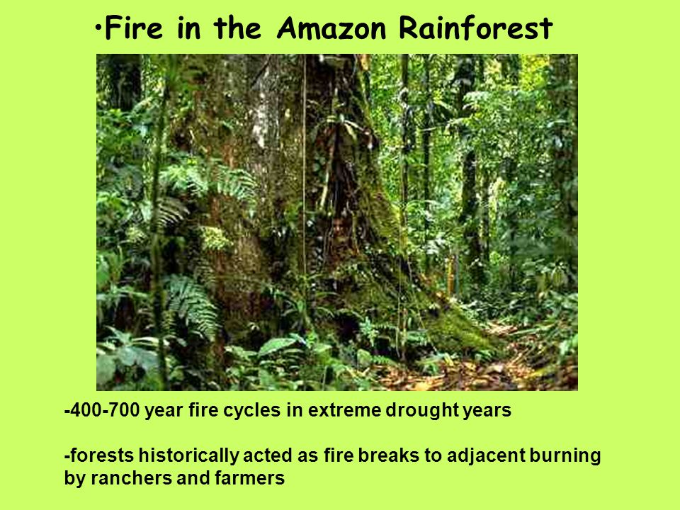 Fire in the Amazon Rainforest -400-700 year fire cycles in extreme drought years -forests historically acted as fire breaks to adjacent burning by ranchers and farmers