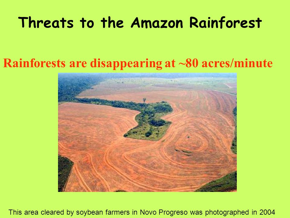 Rainforests are disappearing at ~80 acres/minute Threats to the Amazon Rainforest This area cleared by soybean farmers in Novo Progreso was photographed in 2004