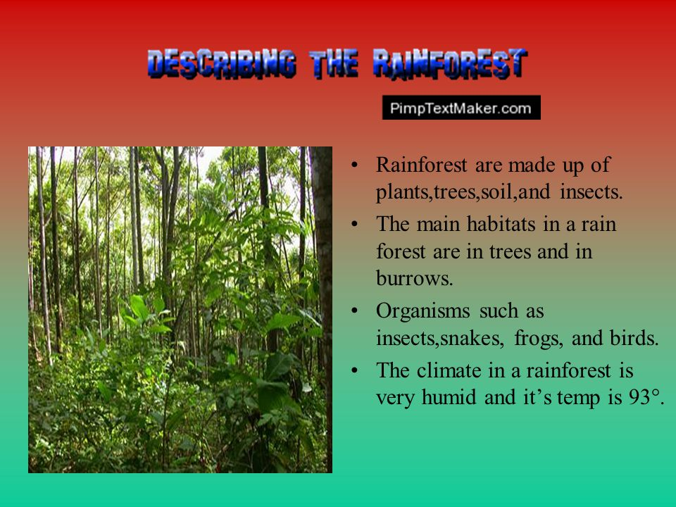 Rainforest are made up of plants,trees,soil,and insects.