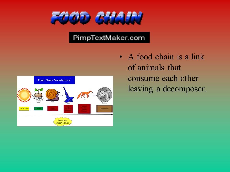 A food chain is a link of animals that consume each other leaving a decomposer.