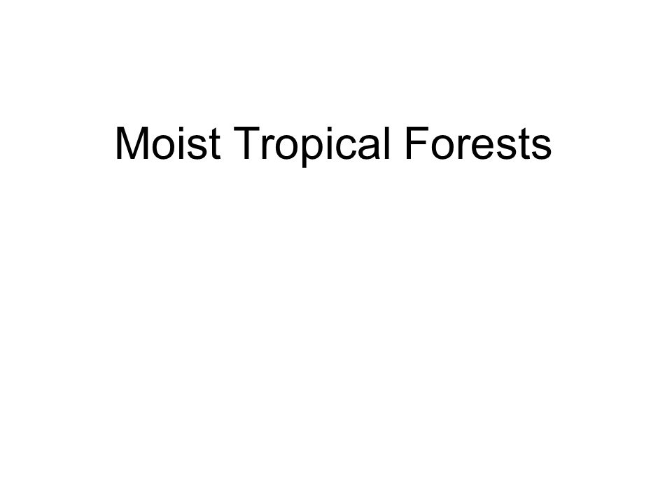 Moist Tropical Forests