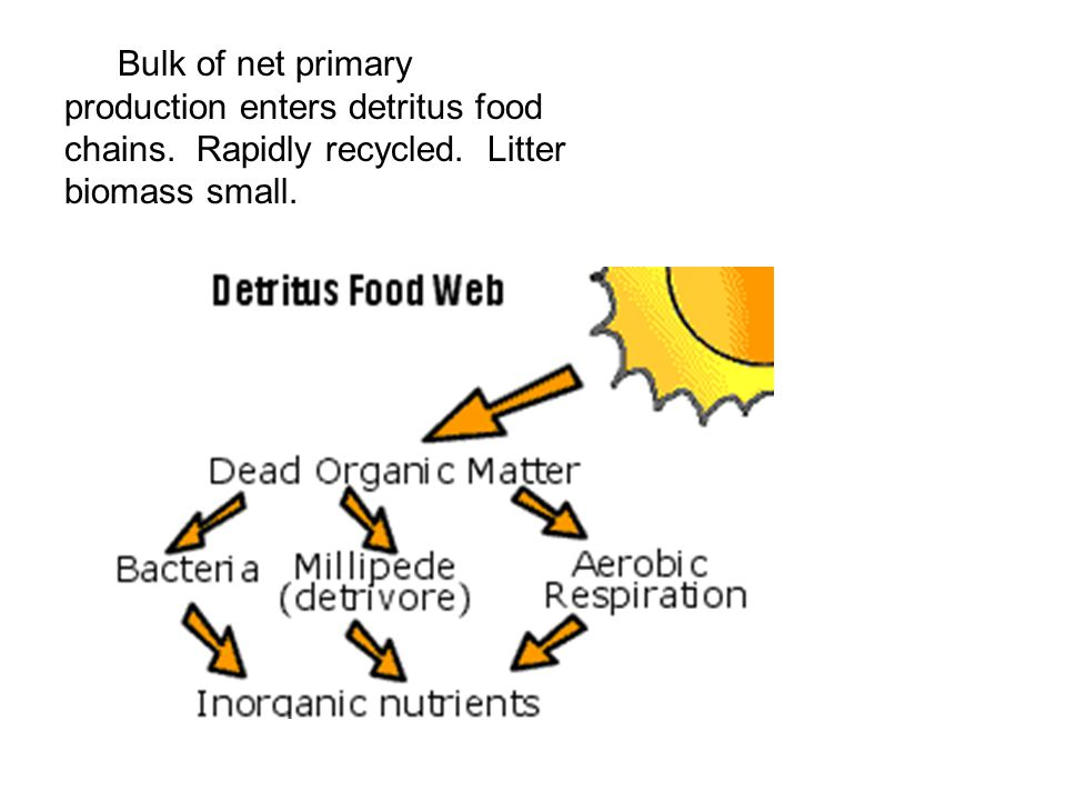 Bulk of net primary production enters detritus food chains. Rapidly recycled. Litter biomass small.