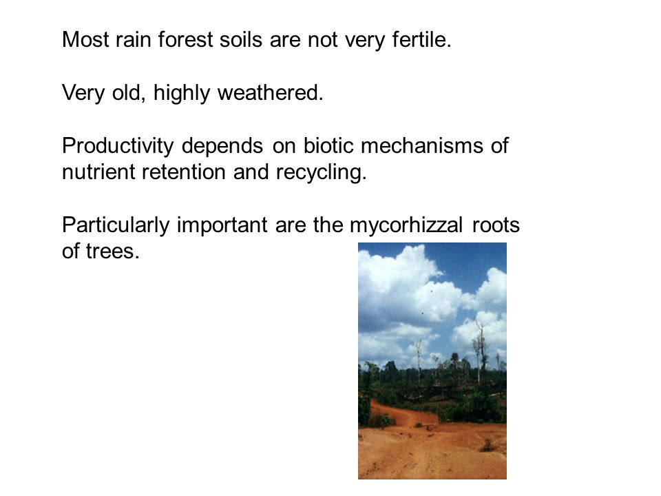 Most rain forest soils are not very fertile.Very old, highly weathered.
