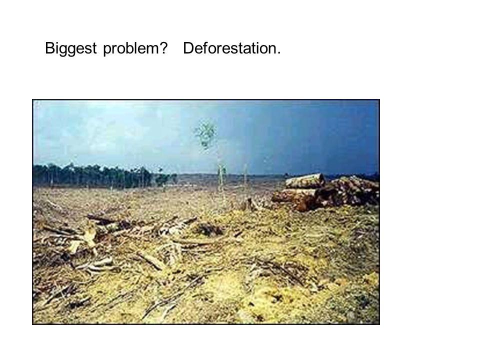 Biggest problem? Deforestation.