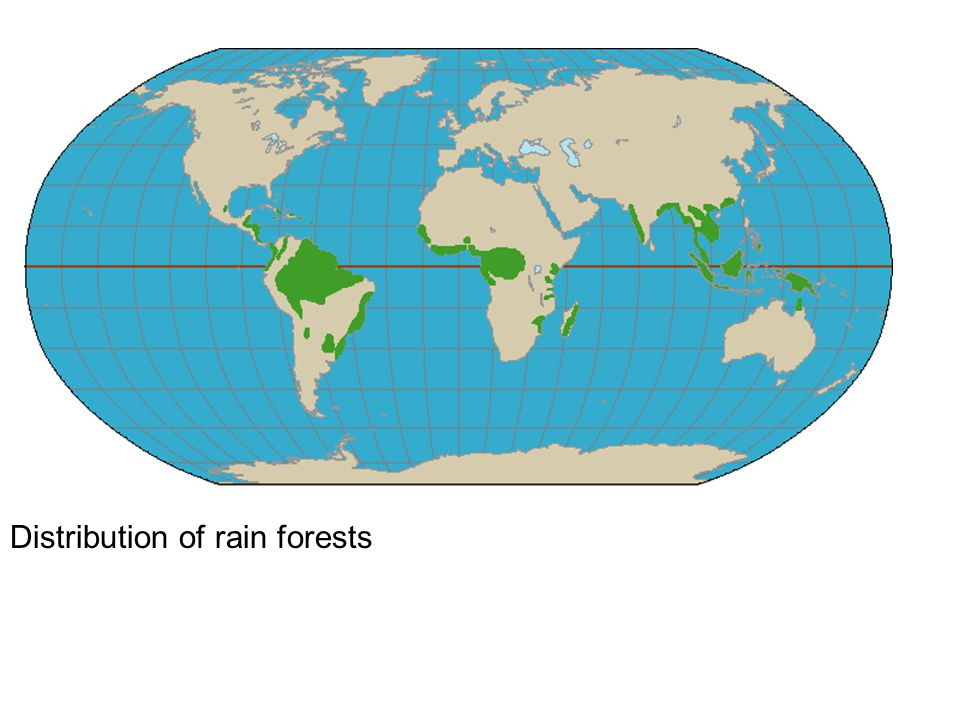 Distribution of rain forests