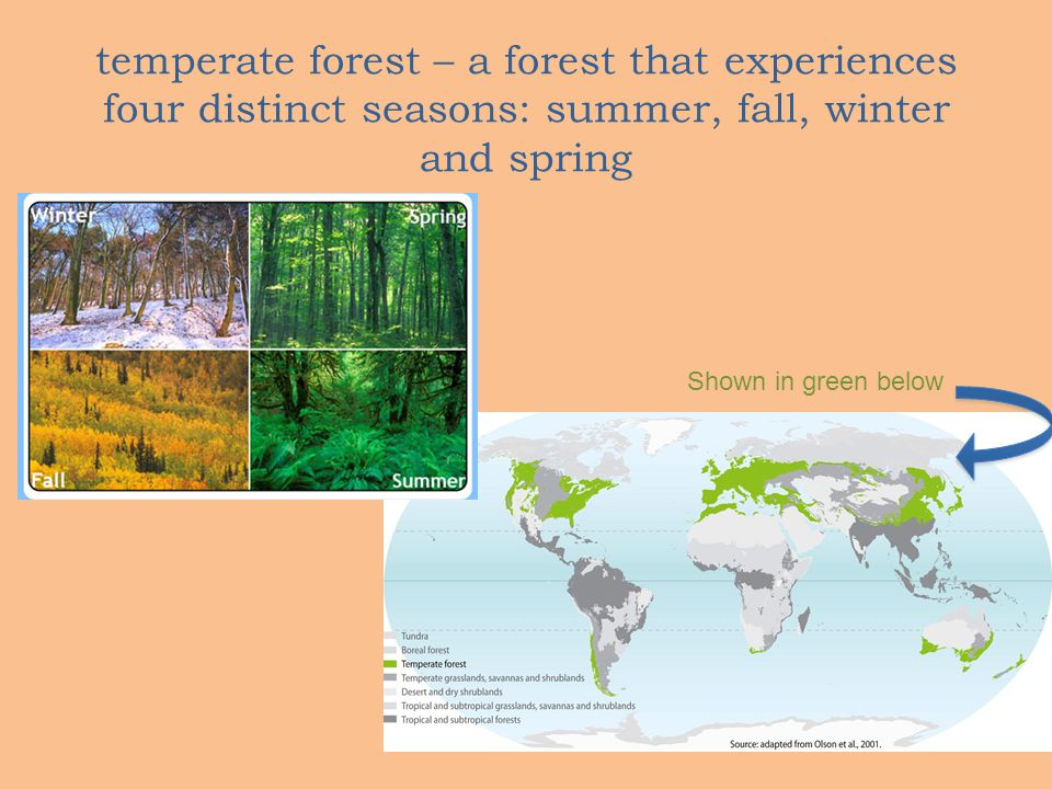 temperate forest – a forest that experiences four distinct seasons: summer, fall, winter and spring Shown in green below