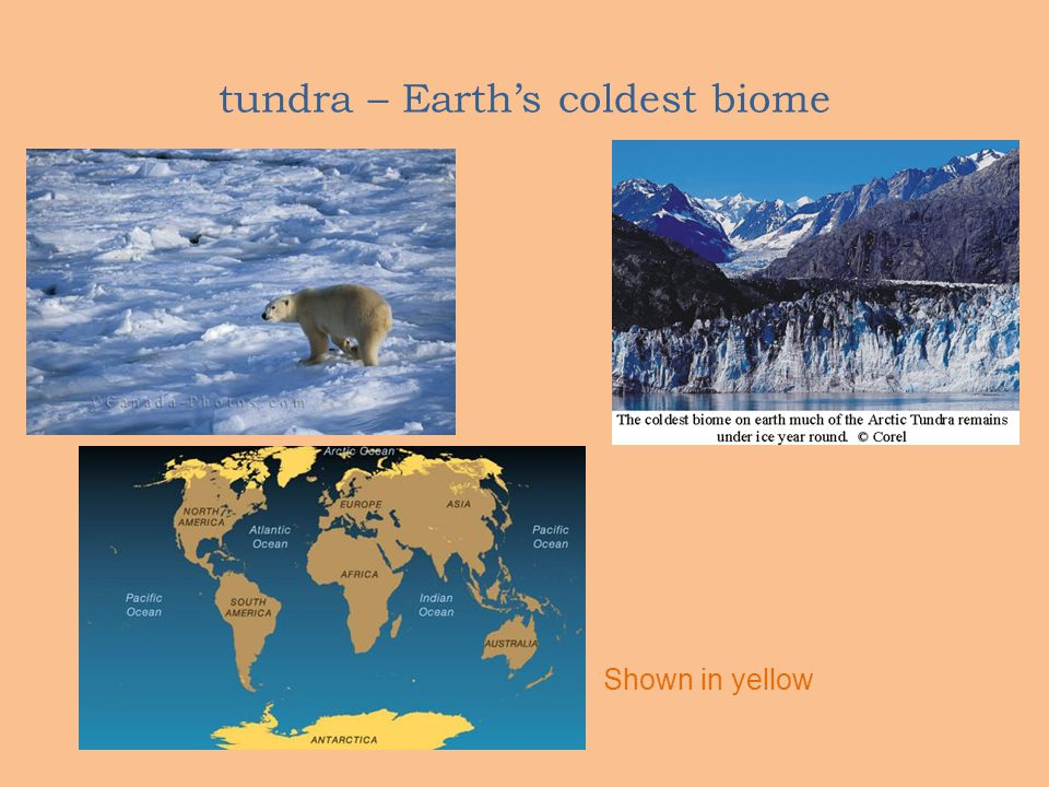 tundra – Earth's coldest biome Shown in yellow