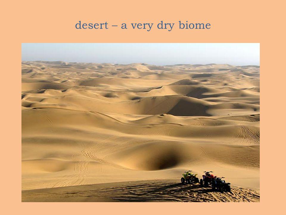 desert – a very dry biome