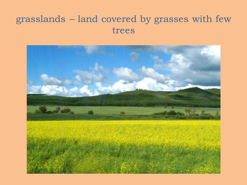 grasslands – land covered by grasses with few trees