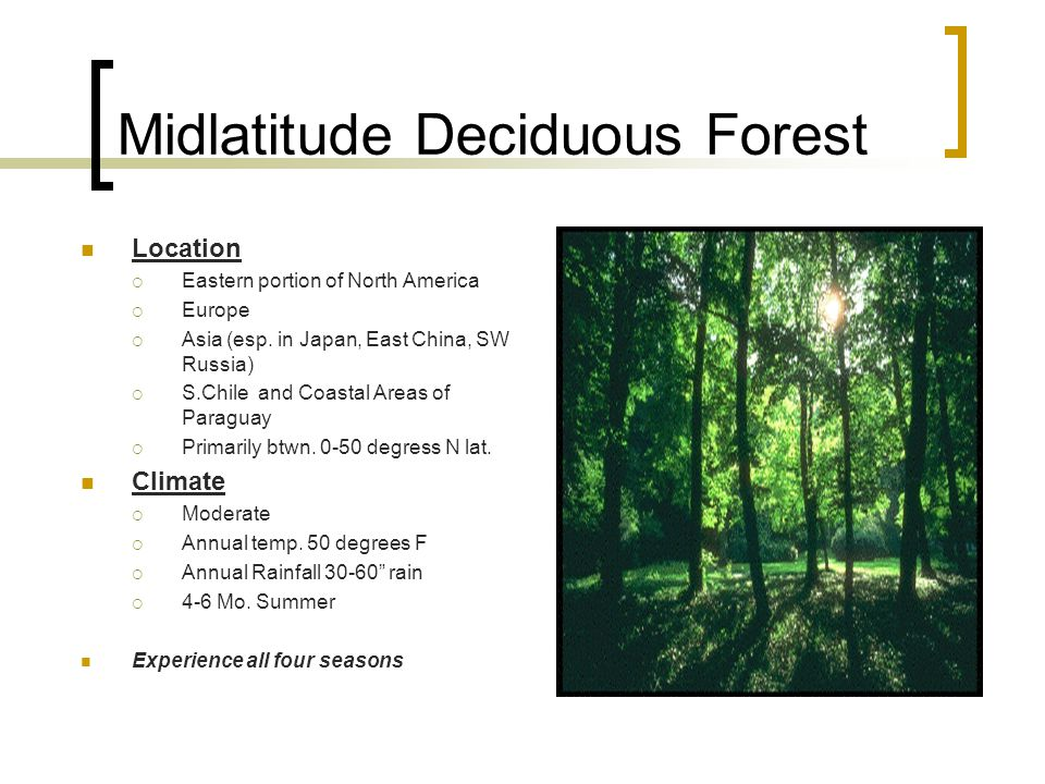 Midlatitude Deciduous Forest Location  Eastern portion of North America  Europe  Asia (esp.
