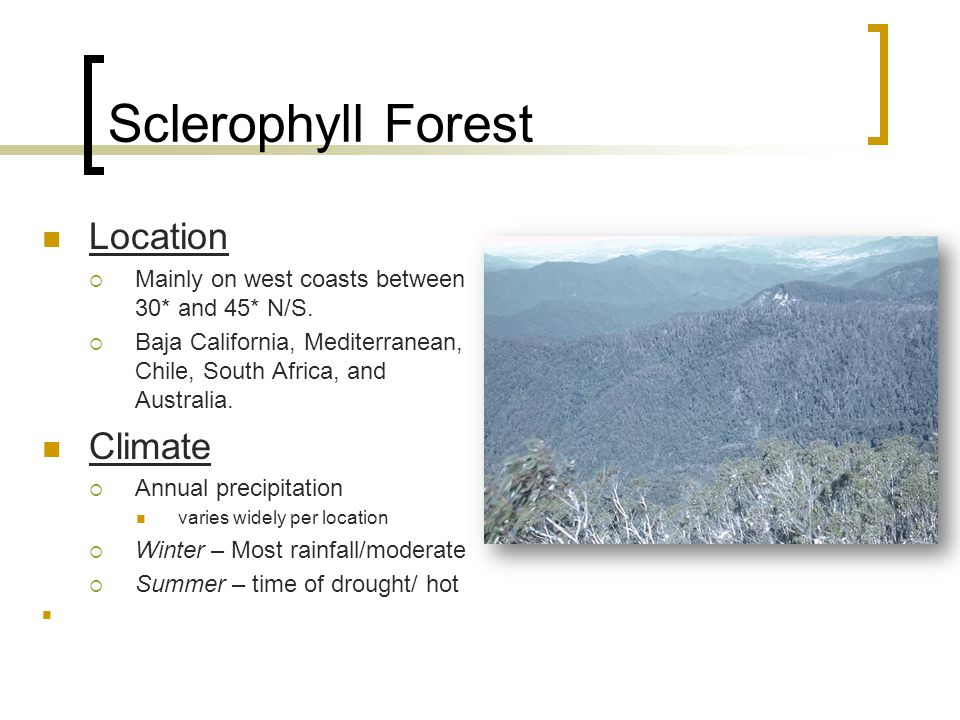 Sclerophyll Forest Location  Mainly on west coasts between 30* and 45* N/S.