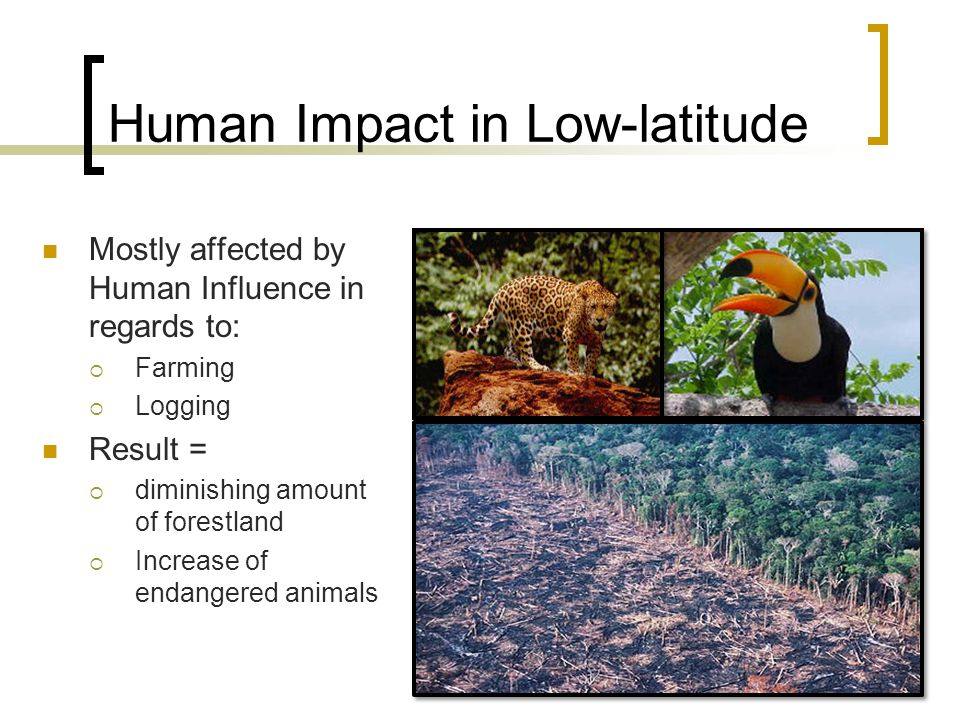 Human Impact in Low-latitude Mostly affected by Human Influence in regards to:  Farming  Logging Result =  diminishing amount of forestland  Increase of endangered animals