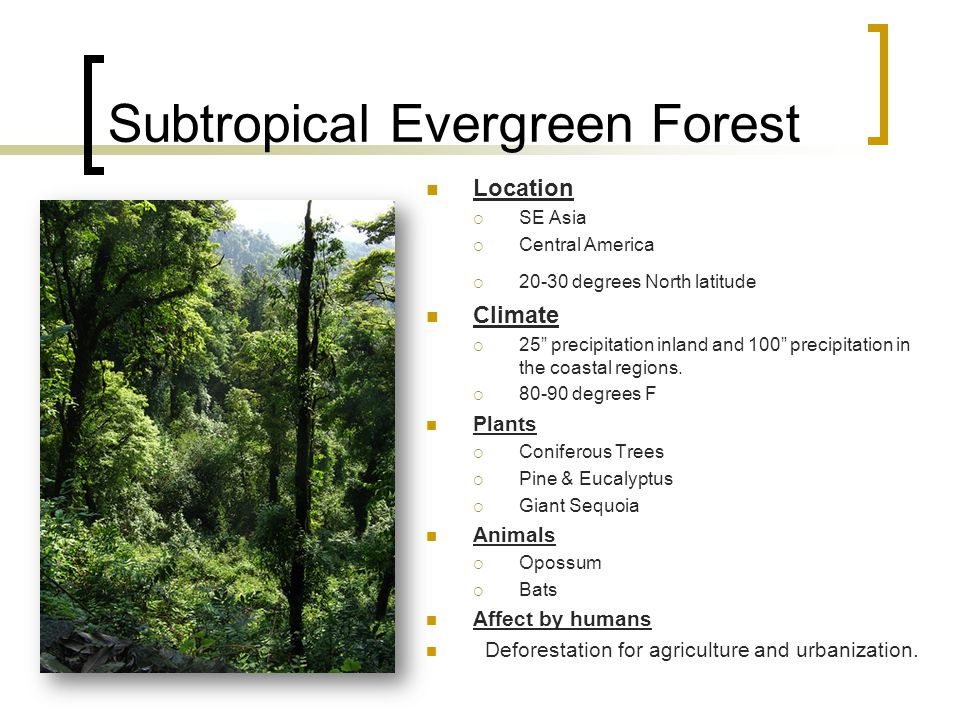 Subtropical Evergreen Forest Location  SE Asia  Central America  20-30 degrees North latitude Climate  25 precipitation inland and 100 precipitation in the coastal regions.
