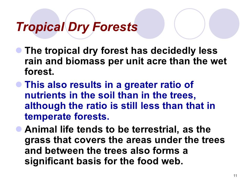 11 Tropical Dry Forests The tropical dry forest has decidedly less rain and biomass per unit acre than the wet forest. This also results in a greater