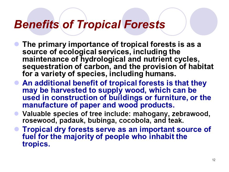12 Benefits of Tropical Forests The primary importance of tropical forests is as a source of ecological services, including the maintenance of hydrological and nutrient cycles, sequestration of carbon, and the provision of habitat for a variety of species, including humans.