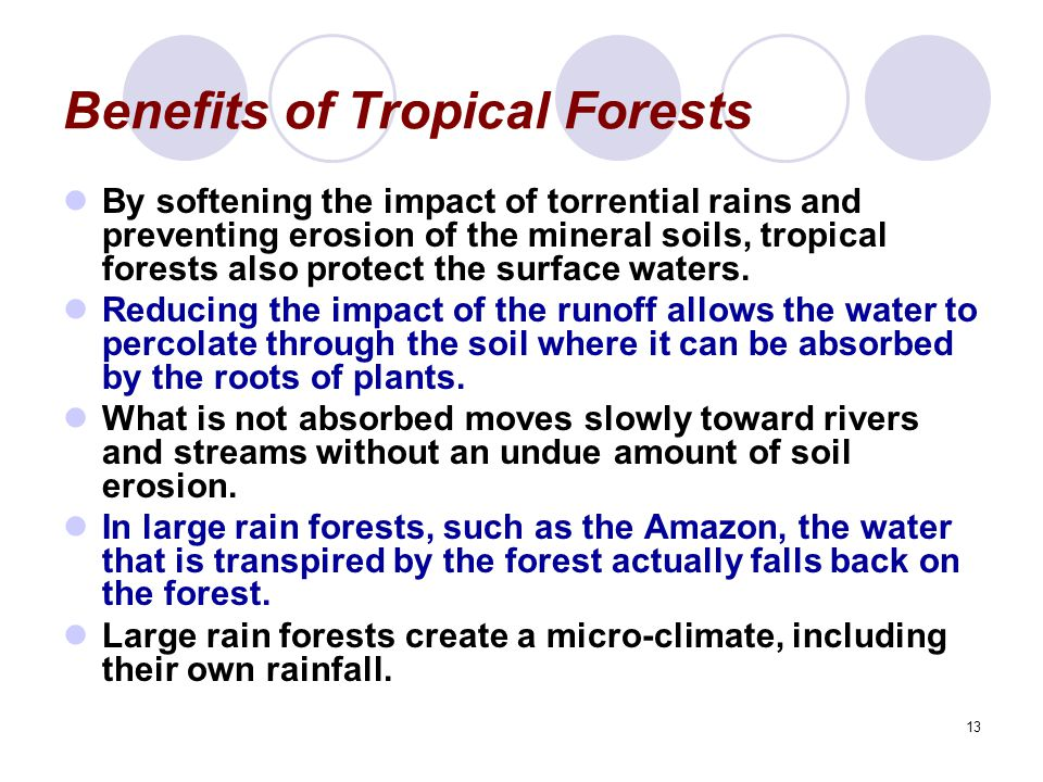 13 Benefits of Tropical Forests By softening the impact of torrential rains and preventing erosion of the mineral soils, tropical forests also protect