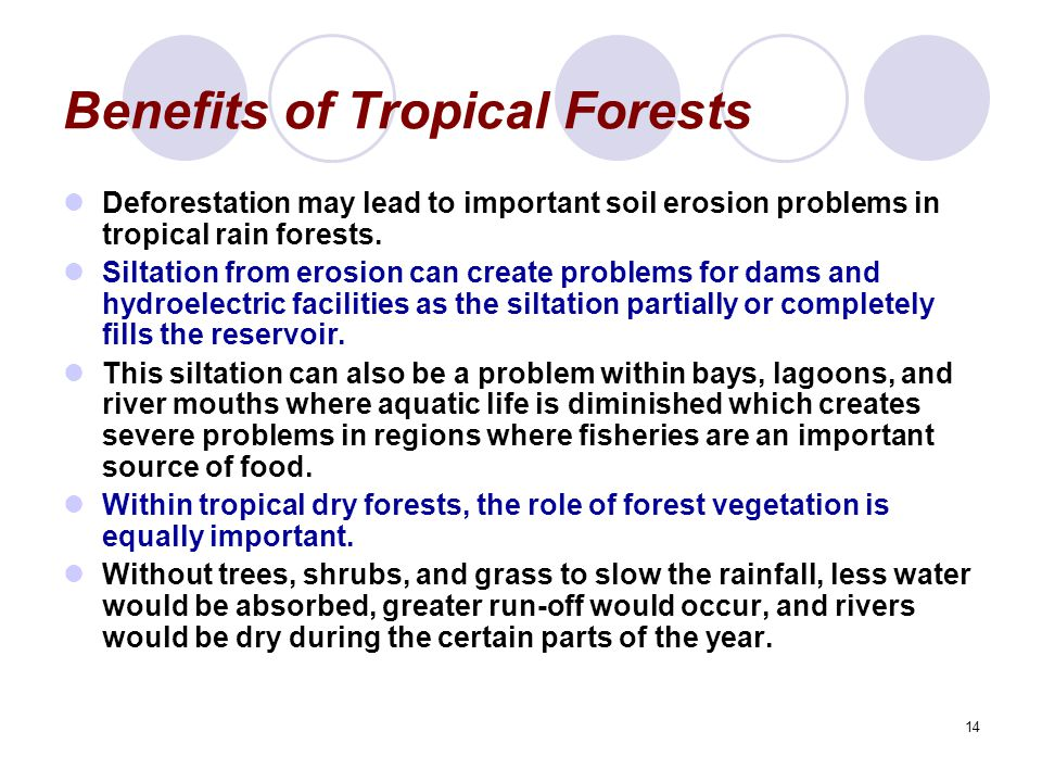 14 Benefits of Tropical Forests Deforestation may lead to important soil erosion problems in tropical rain forests. Siltation from erosion can create