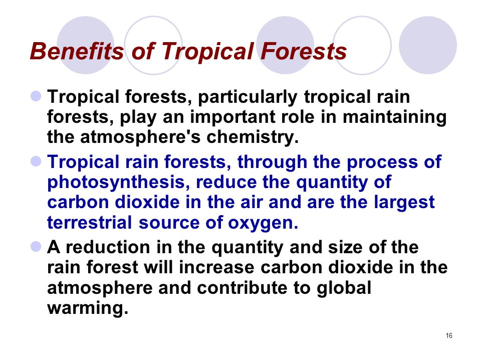 16 Benefits of Tropical Forests Tropical forests, particularly tropical rain forests, play an important role in maintaining the atmosphere s chemistry.