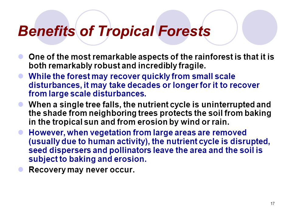 17 Benefits of Tropical Forests One of the most remarkable aspects of the rainforest is that it is both remarkably robust and incredibly fragile. Whil