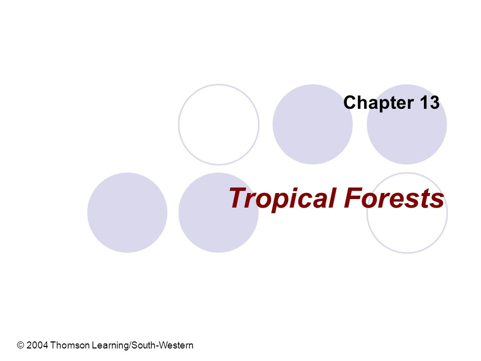 Tropical Forests Chapter 13 © 2004 Thomson Learning/South-Western