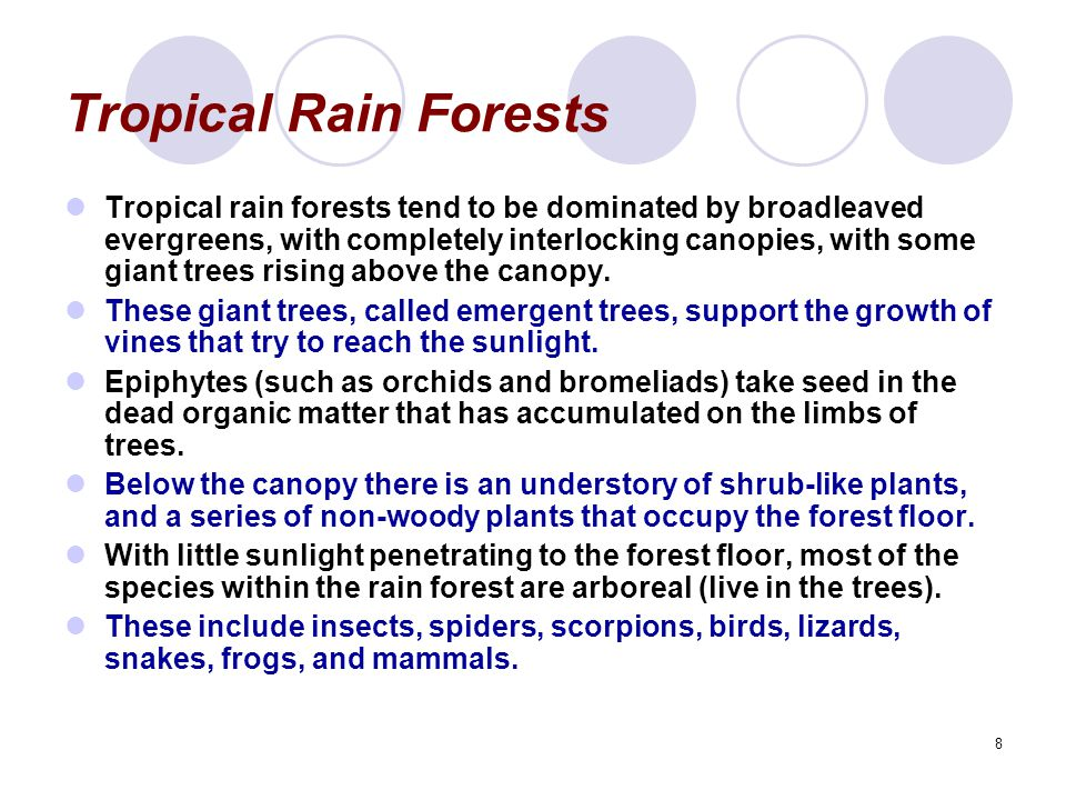 8 Tropical Rain Forests Tropical rain forests tend to be dominated by broadleaved evergreens, with completely interlocking canopies, with some giant trees rising above the canopy.