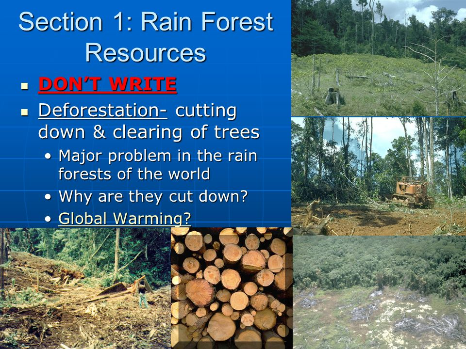 Section 1: Rain Forest Resources DON'T WRITE DON'T WRITE Deforestation- cutting down & clearing of trees Deforestation- cutting down & clearing of trees Major problem in the rain forests of the worldMajor problem in the rain forests of the world Why are they cut down?Why are they cut down.
