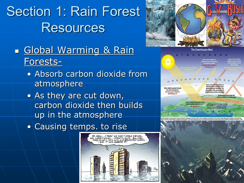 Section 1: Rain Forest Resources Global Warming & Rain Forests- Global Warming & Rain Forests- Absorb carbon dioxide from atmosphereAbsorb carbon dioxide from atmosphere As they are cut down, carbon dioxide then builds up in the atmosphereAs they are cut down, carbon dioxide then builds up in the atmosphere Causing temps.