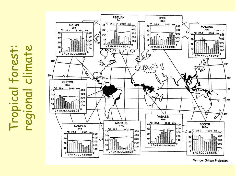 Tropical forests: productivity and diversity Primary productivity (forests) [g m -2 yr -1 ]:Primary productivity (forests) [g m -2 yr -1 ]: Tropical:1500[1800]2000 Temperate:1000[1300]1500 Boreal:500[800]1000 DiversityMalaysiaAmazonasAfrica PlantsPlants : 60 00050 00030 000 Birds:Birds: 127 270 150 (3 km 2 ) (3 km 2 ) (50 km 2 ) Bats:Bats:8198115