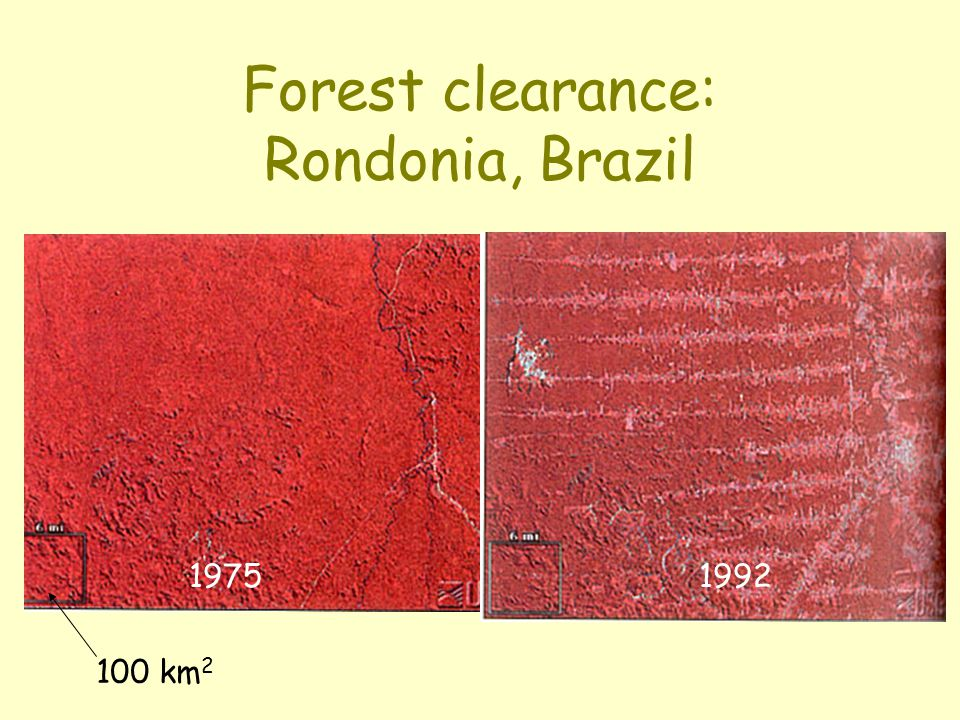 Forest clearance: Rondonia, Brazil 1975 1992 100 km 2