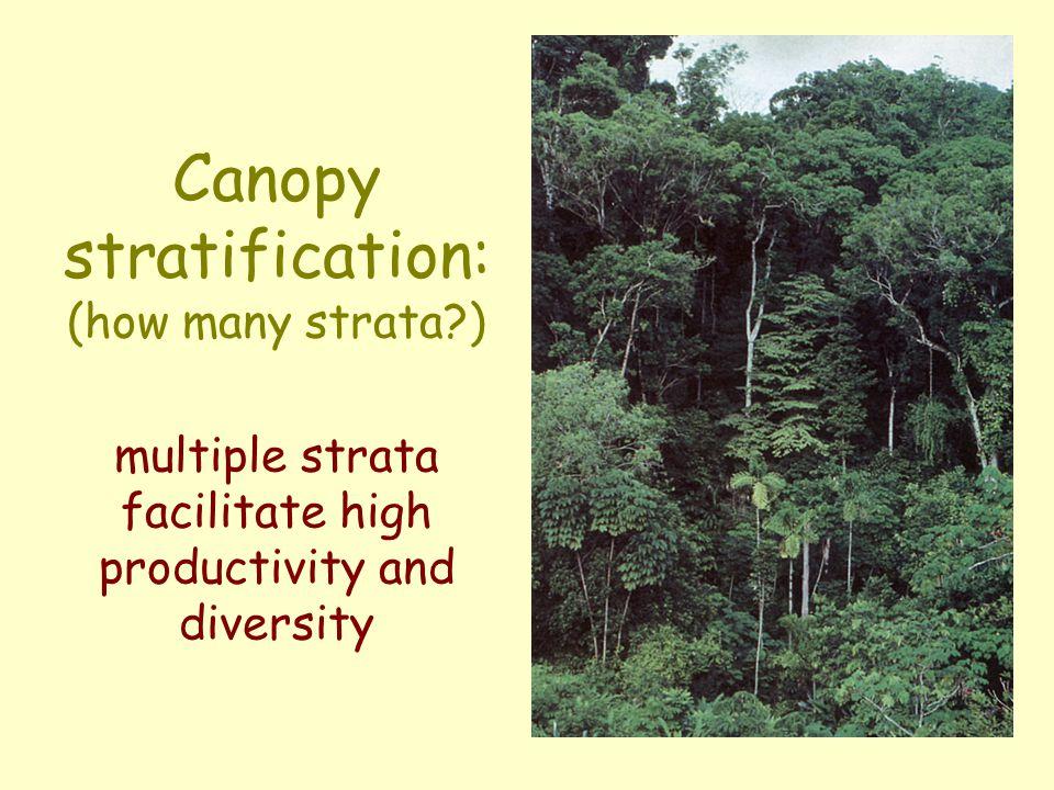 Density variations in rainforest stands