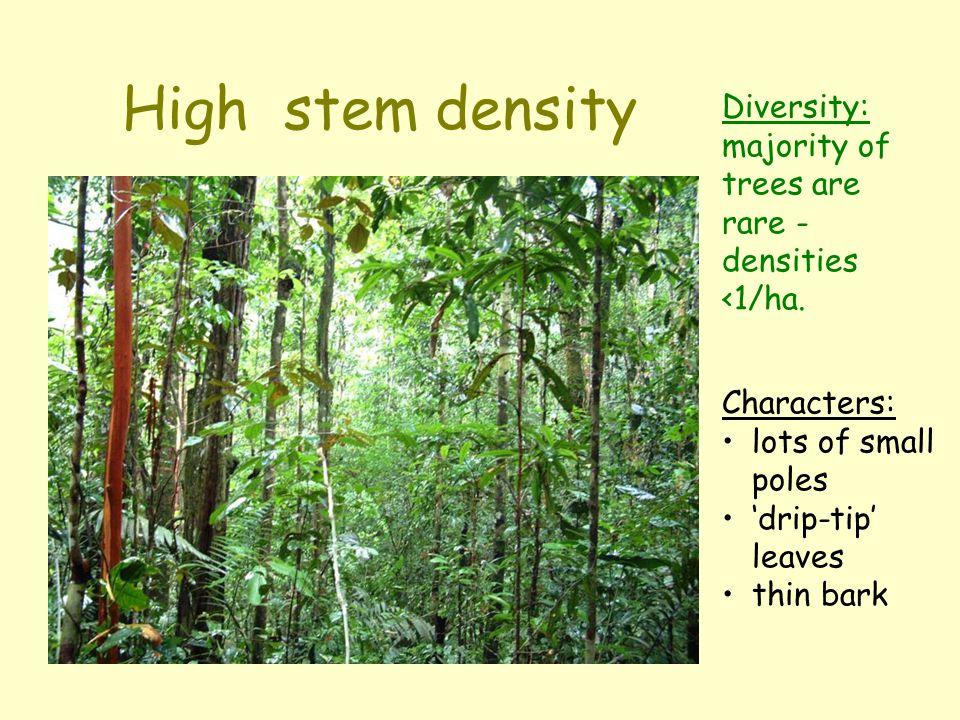 Leaf shape: acute ('drip-tip'), entire margin lichen growth on palm leaf 'scratch and sniff' taxonomy