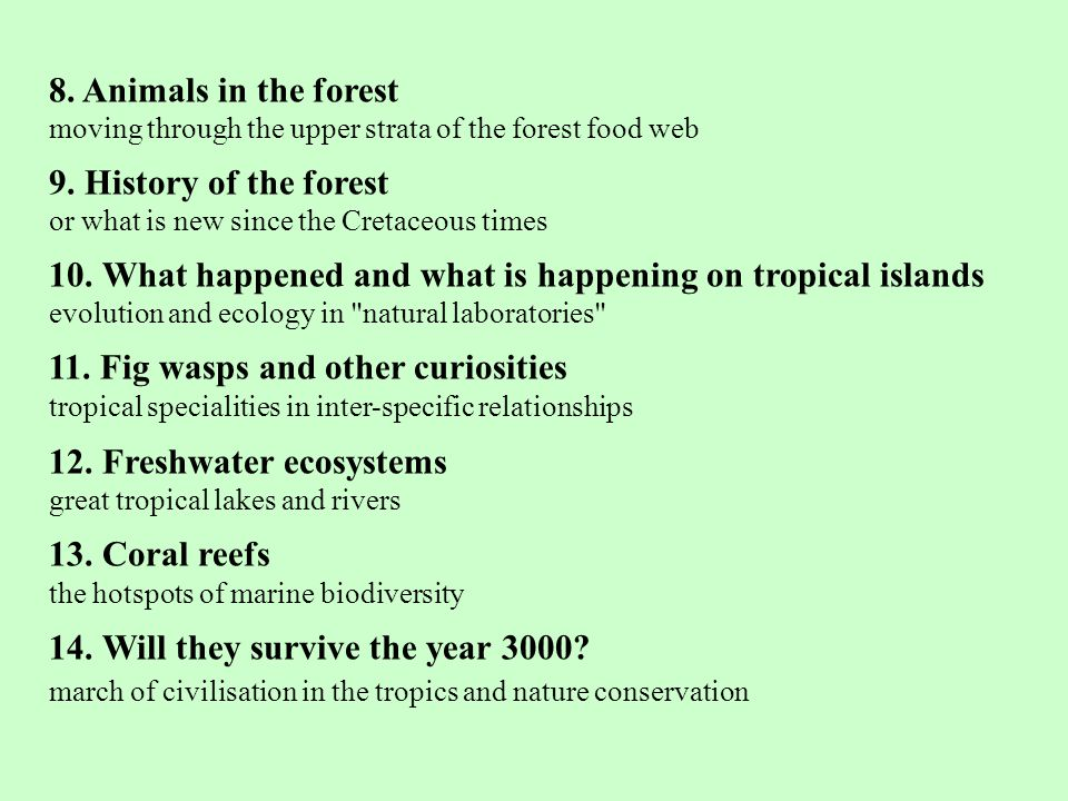 8.Animals in the forest moving through the upper strata of the forest food web 9.