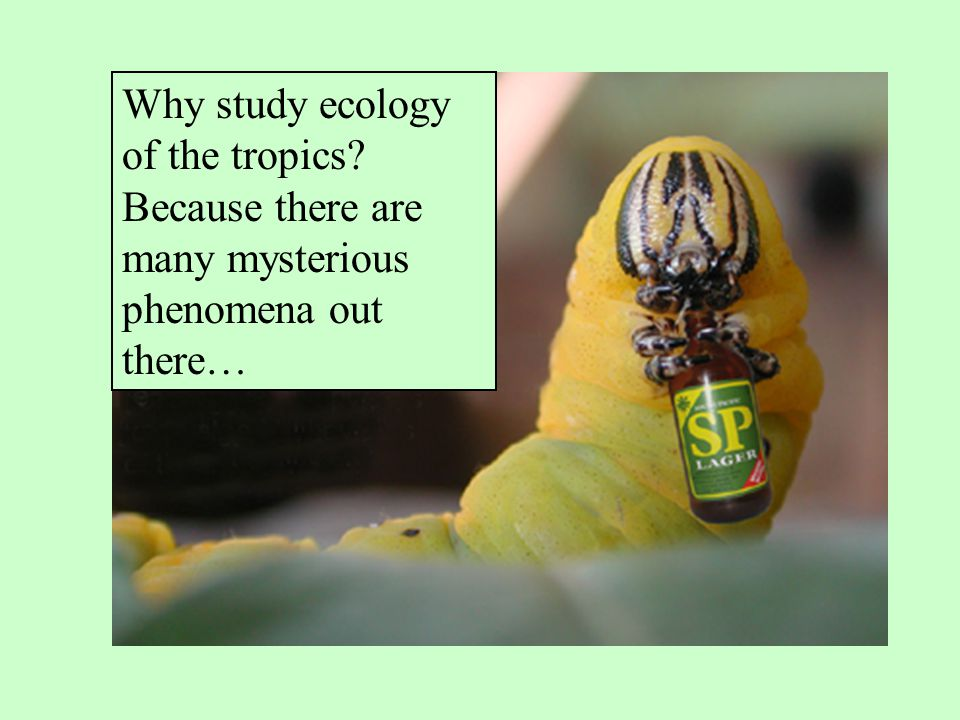 Why study ecology of the tropics? Because there are many mysterious phenomena out there…