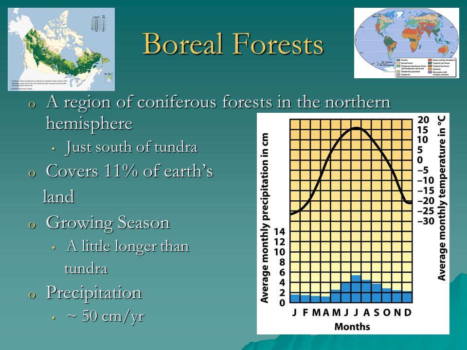 Boreal Forests o A region of coniferous forests in the northern hemisphere Just south of tundra Just south of tundra o Covers 11% of earth's land land
