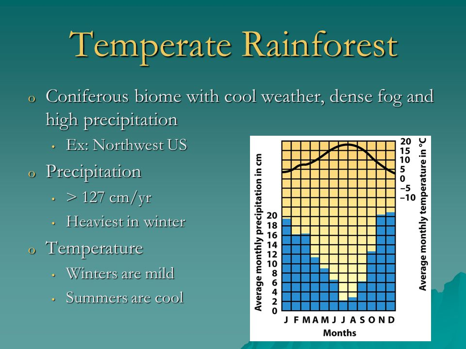 Temperate Rainforest o Coniferous biome with cool weather, dense fog and high precipitation Ex: Northwest US Ex: Northwest US o Precipitation > 127 cm